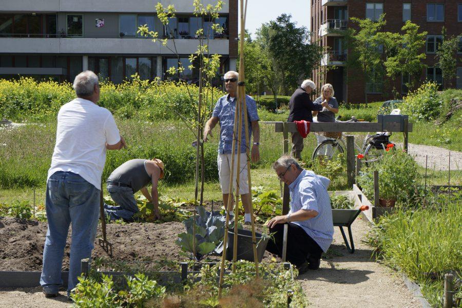 de moestuiniers van Delfts Groen helpen ons met de Zintuigentuin