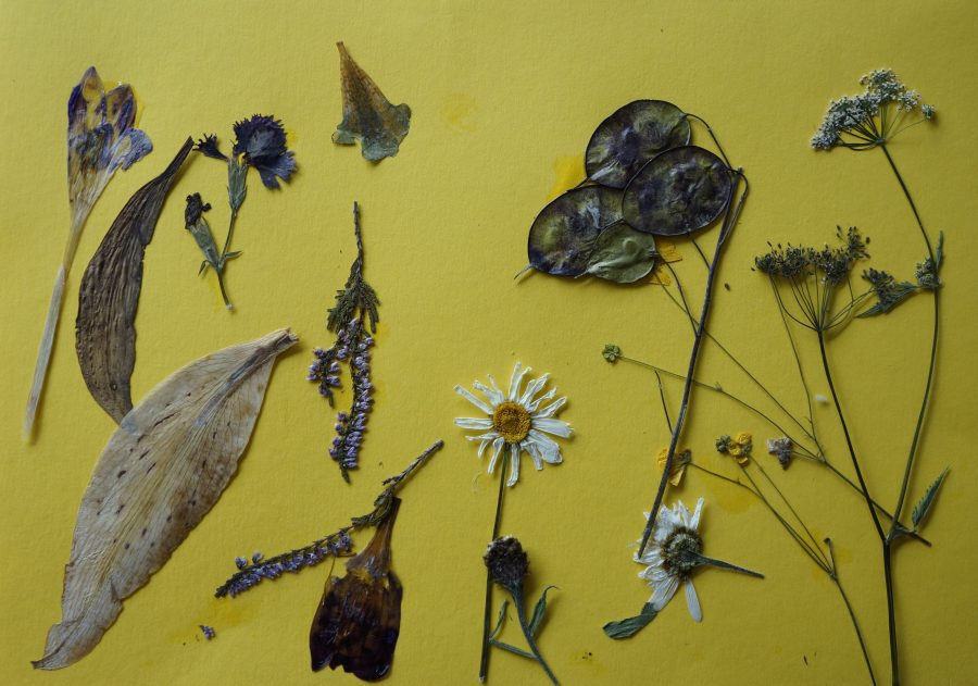 Herbarium schilderij van Anneke