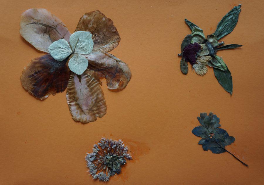 Herbarium schilderij van Elly
