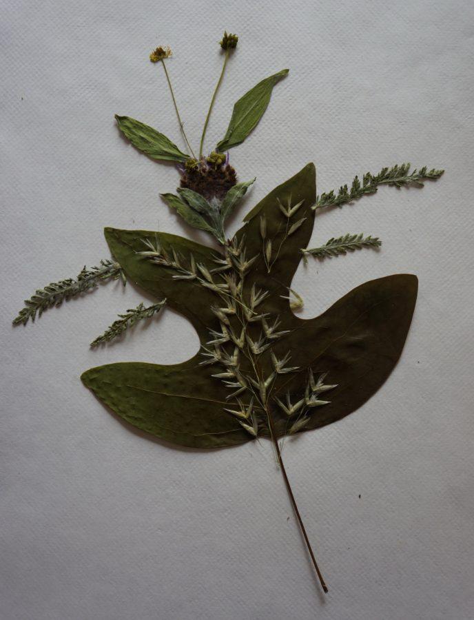 Herbarium schilderij van Joke