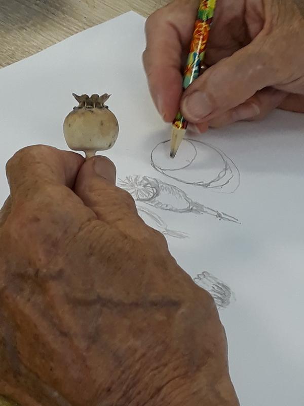 papaverzaadbollen tekenen