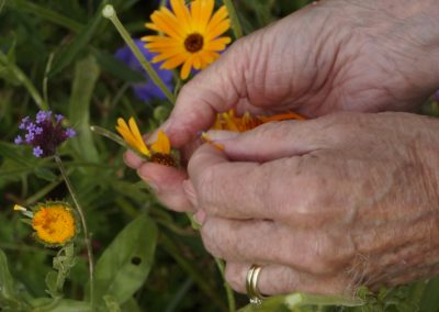 We moeten nog goudsbloemblaadjes plukken voor de zalf die we volgende week gaan maken!