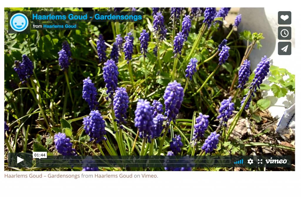 Haarlems Goud, een video over Gardensongs