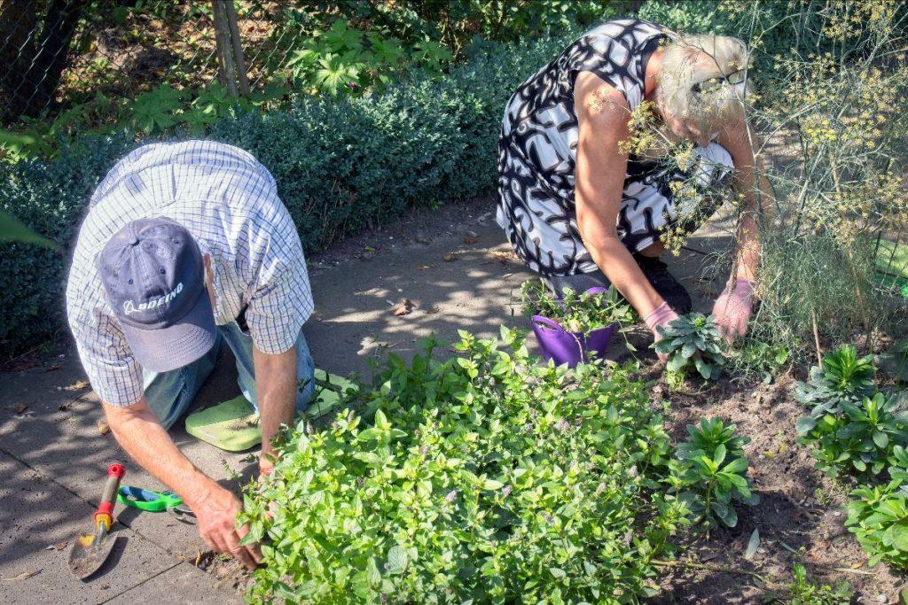Dementalent, gekoesterde momenten in de tuin