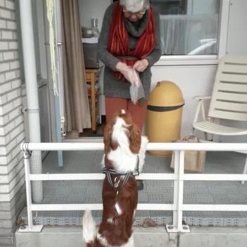 Therapiehond MIEP mist deelnemers en visa versa